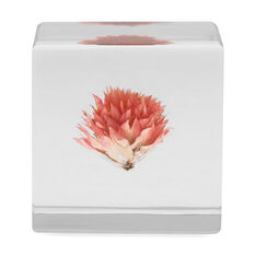 Globe Amaranth Object in color