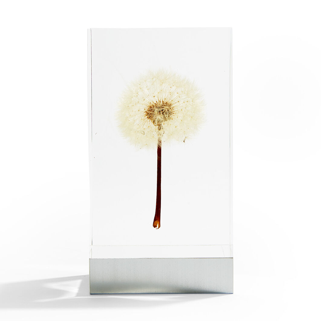 OLED Dandelion Objet d'Art in color