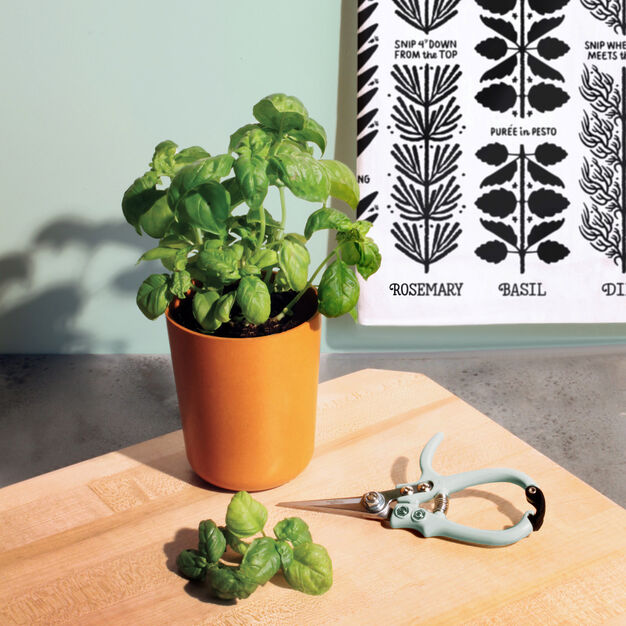Modern Sprout Plant Gift Sets in color Basil
