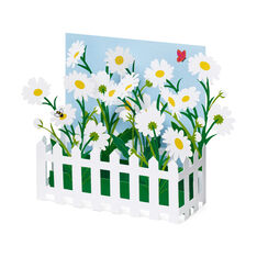 Picket Fence Daisies Pop-Up Note Cards - Set of 6 in color