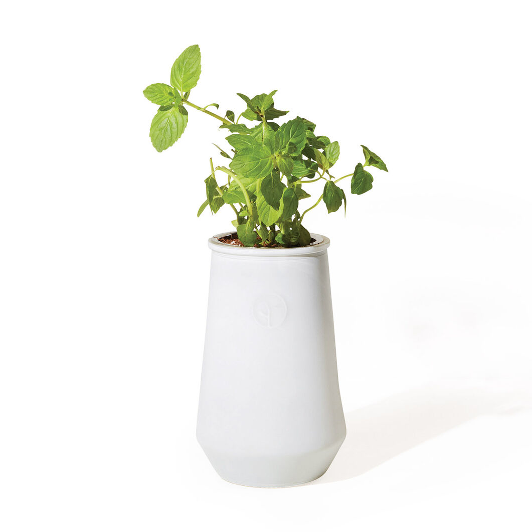 Modern Sprout Hydroponic Plant Kit in color Green