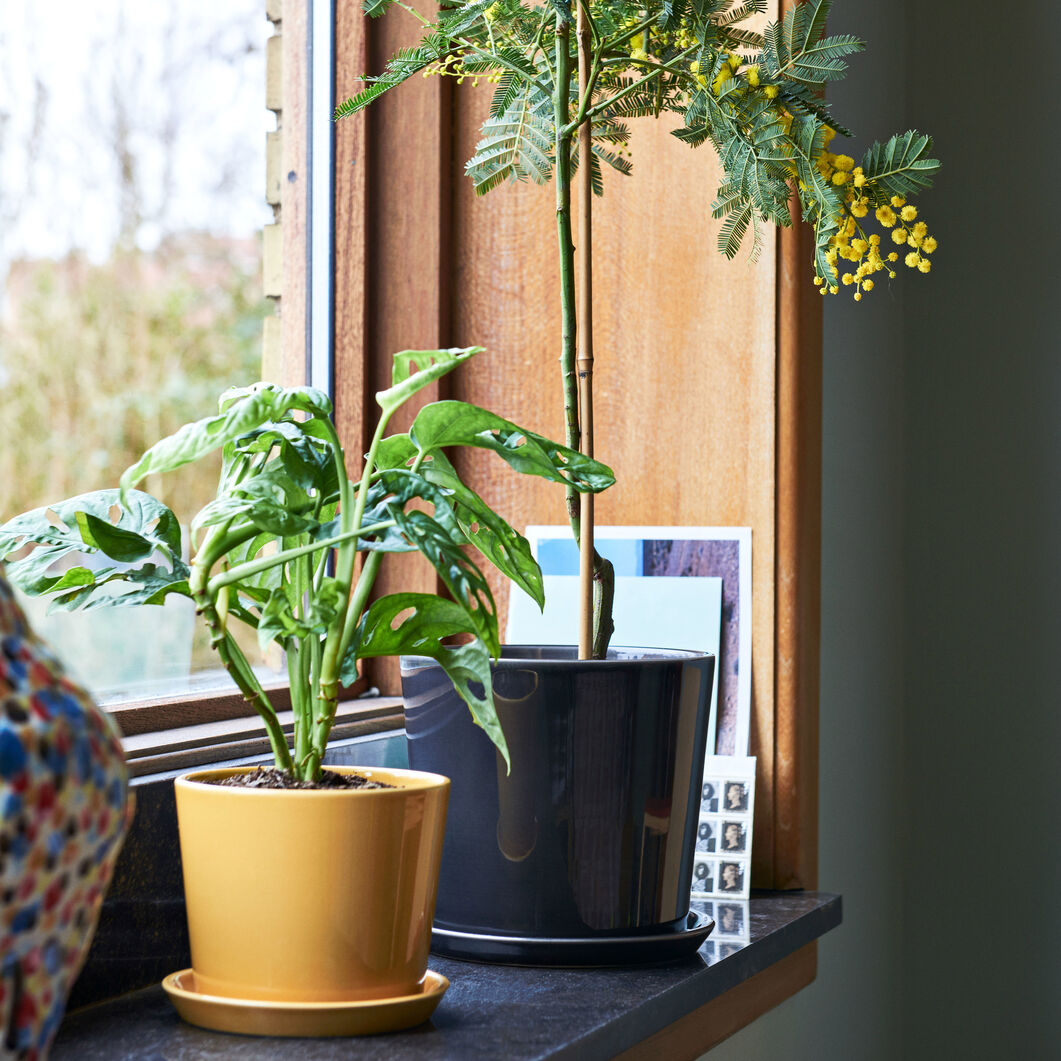 HAY Botanical Plant Pot in color Anthracite
