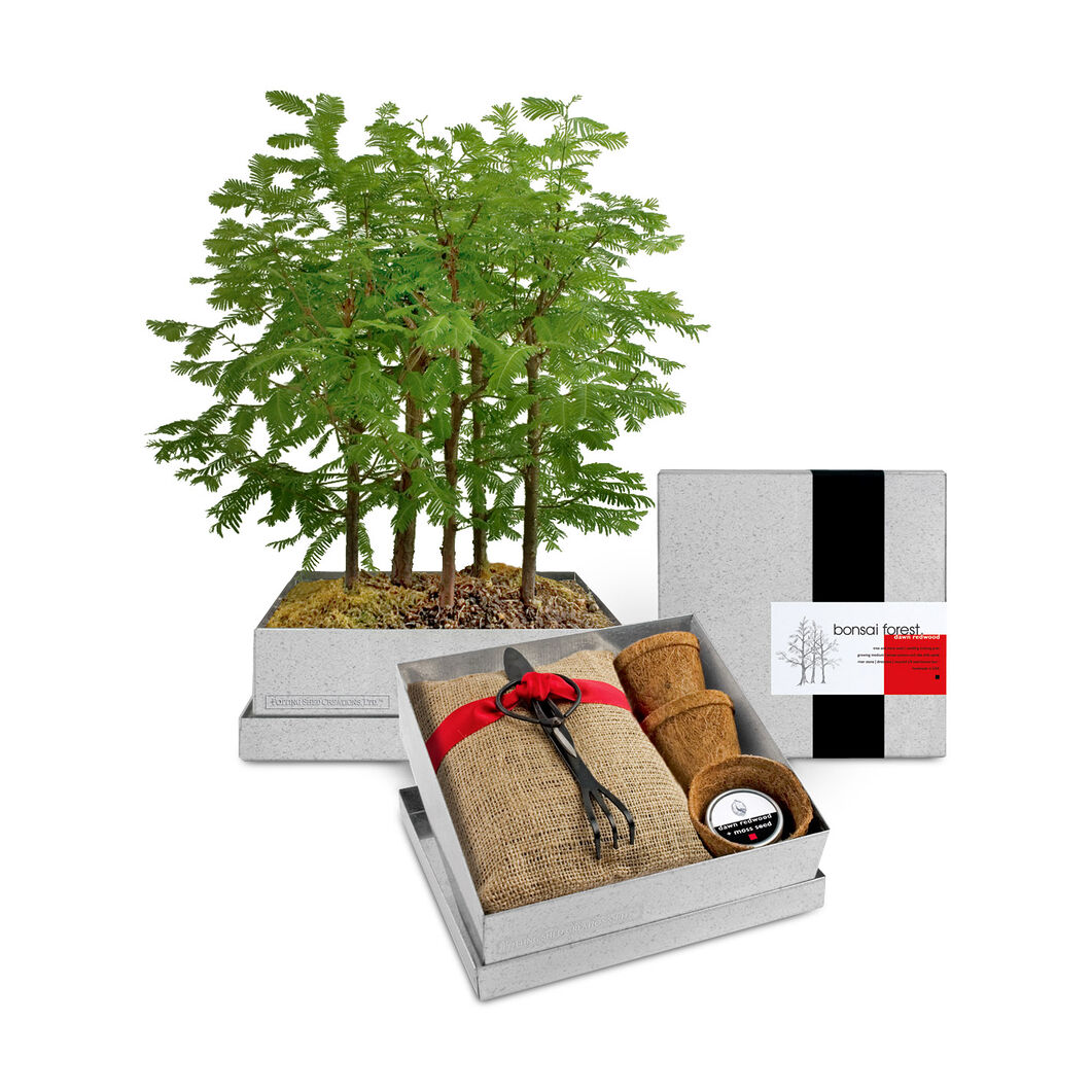 Bonsai Forest Growing Kit in color