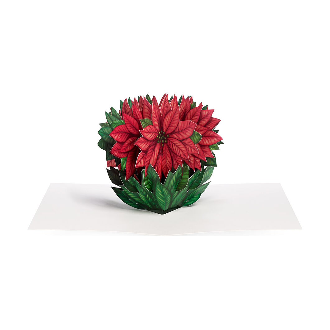 cheerful poinsettia holiday cards box of - Moma Holiday Cards