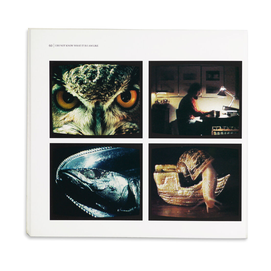 Bill Viola: Installations and Videotapes - Paperback in color