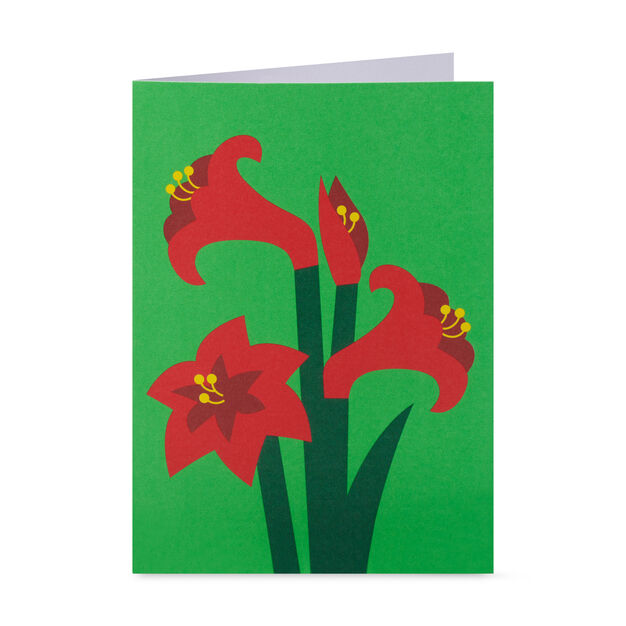 Festive Amaryllis Holiday Cards - Set of 8 in color