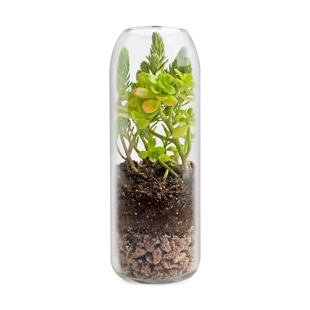 Sedum Terrarium in color
