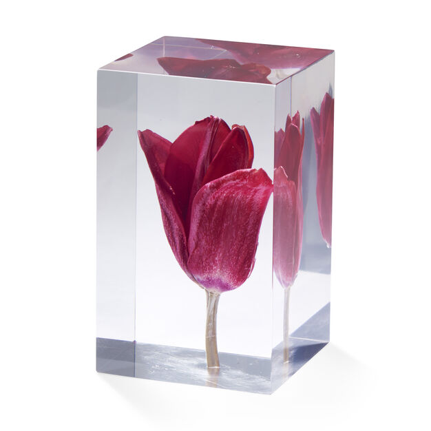 Tulip Objet d'Art in color