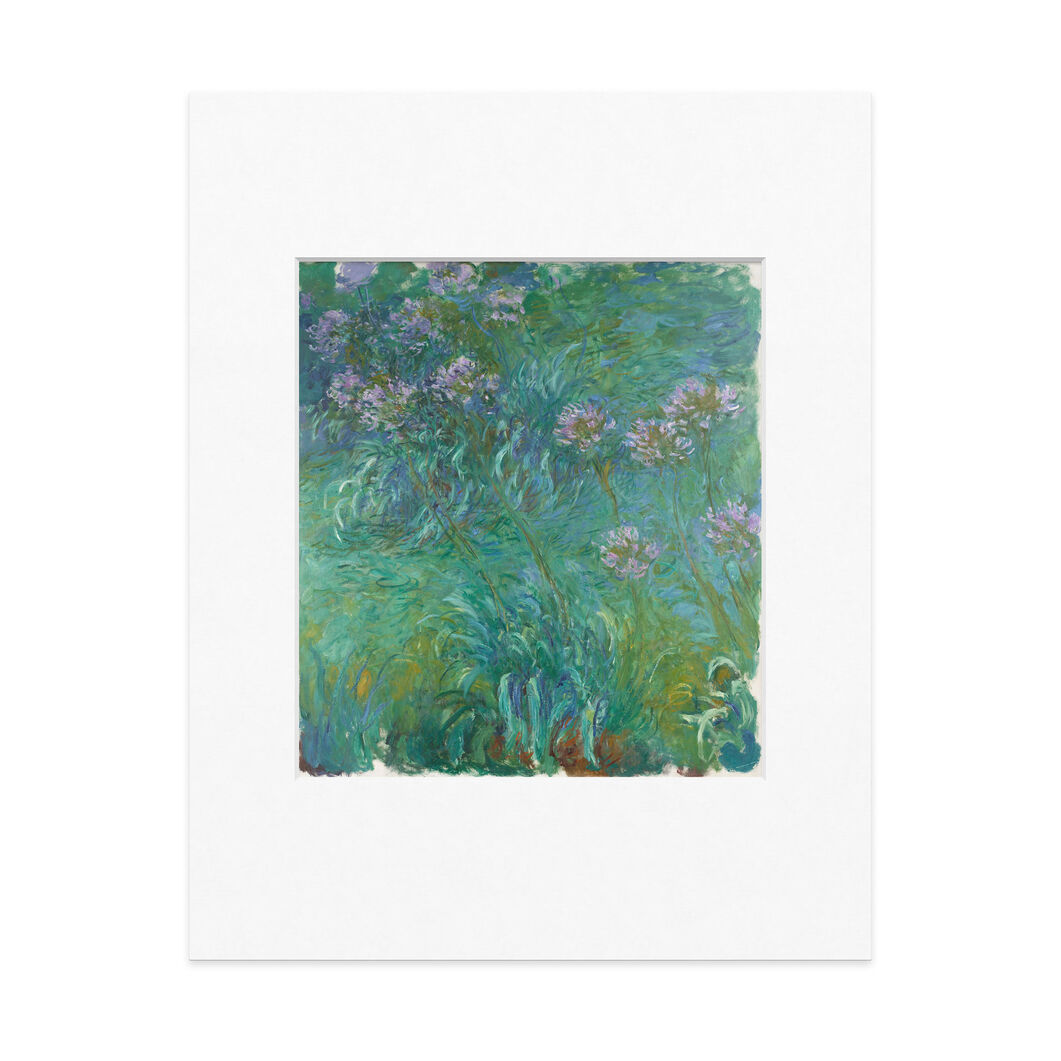 Monet: Agapanthus Matted Print in color